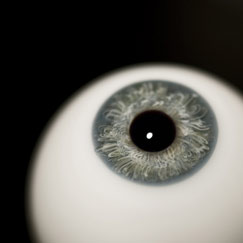Frontal close-up of a glass eye with a blue-grey iris